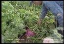 Farming in Alaska?
