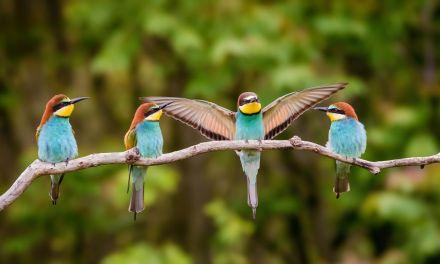 La ligue de protection des oiseaux : protéger la biodiversité en accompagnant les entreprises
