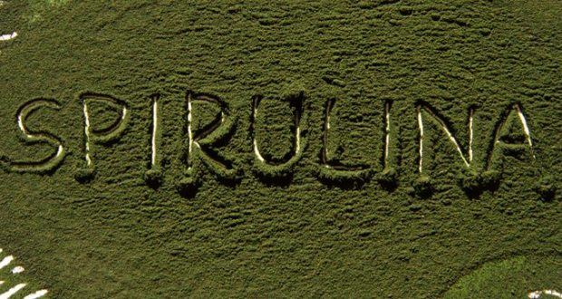 Dangers of spirulina