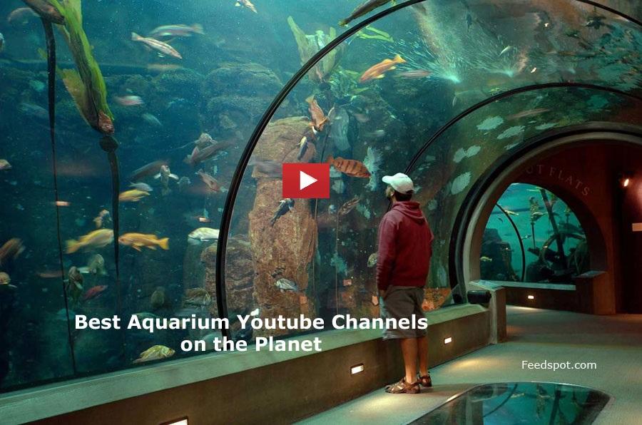 top 75 aquarium youtube