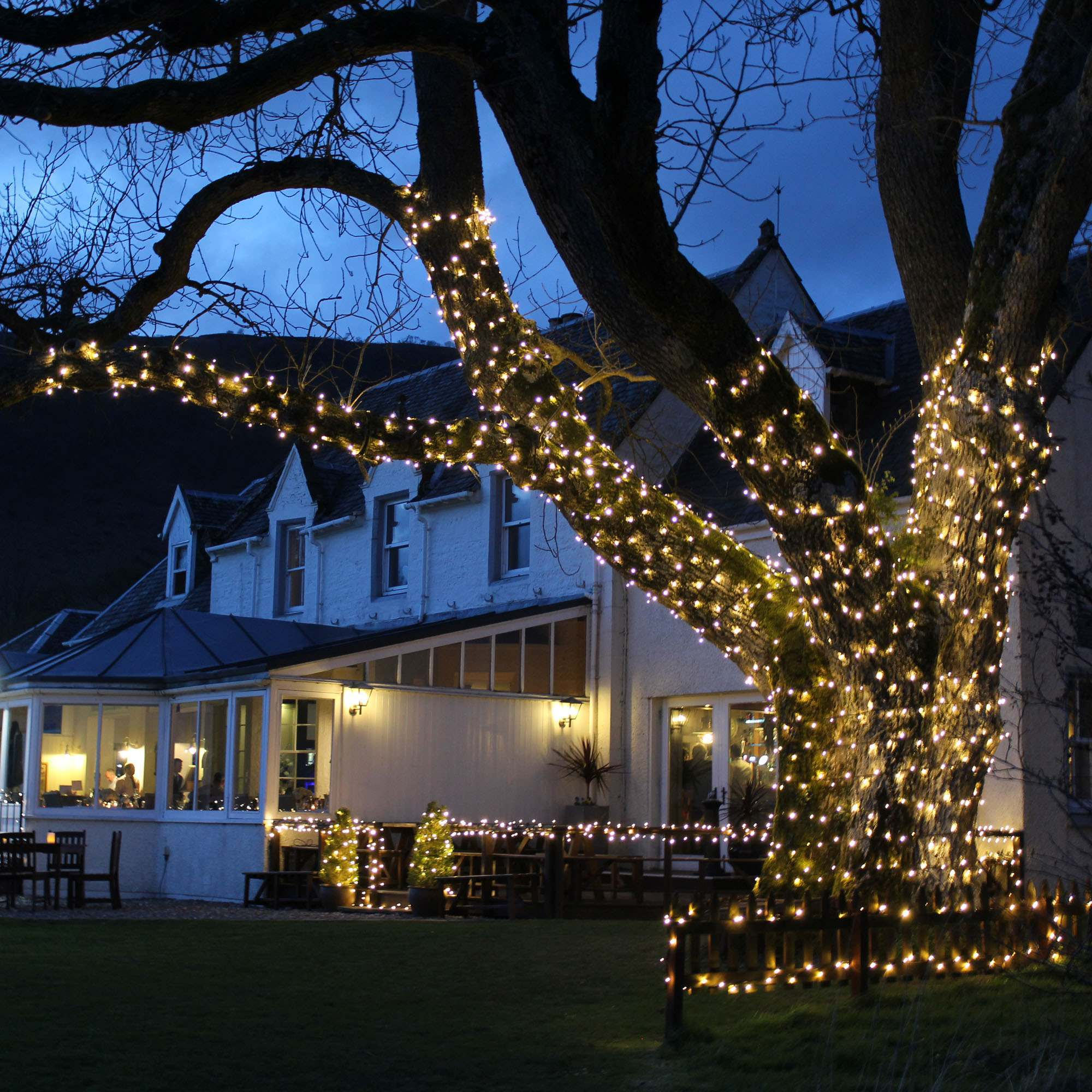 hight resolution of 4 ways to install christmas lights on an outdoor tree