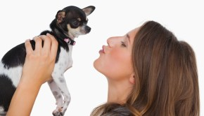 Happy woman looking at her chihuahua on white background