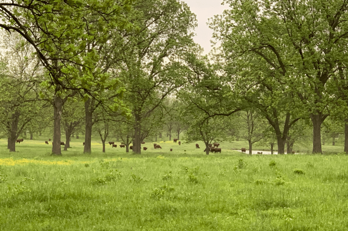 Using fieldmargin to design grazing plans at a holistic cattle ranch in Tulsa, Oklahoma