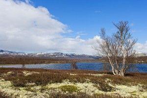 Fokstumyra-Fjellsee-Norwegen