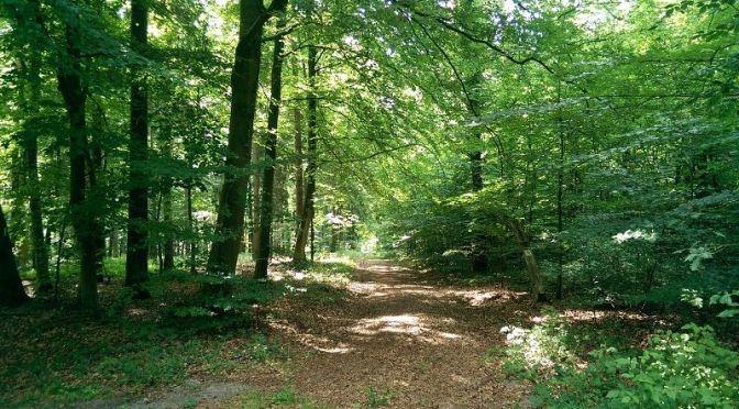 5 Gründe für einen Abstecher in den Wald