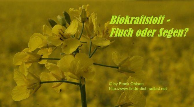 Biokraftstoffe fördern den internationalen Wettlauf um Ackerland