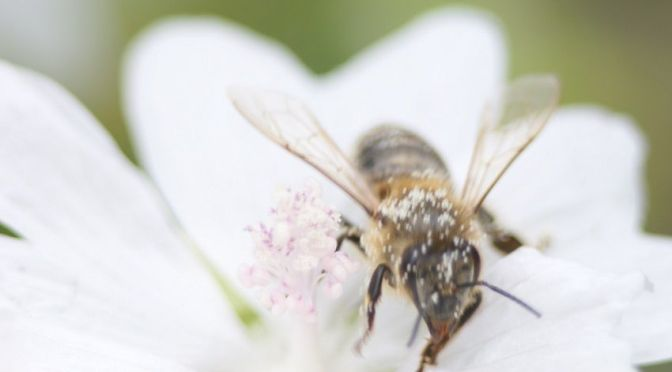 Rettet die Bienen | Greenpeace