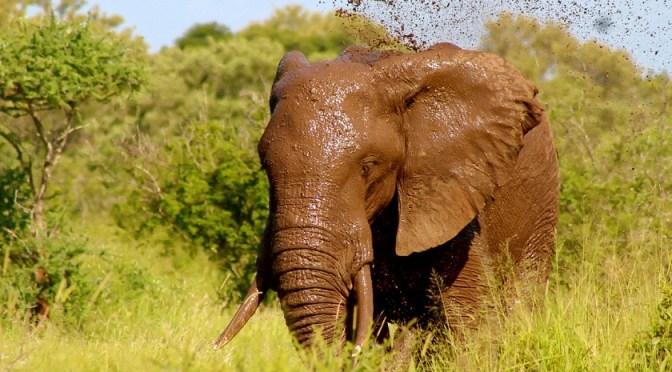 Naturschutz Elfenbein