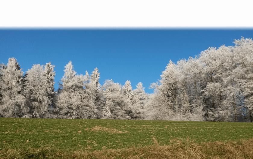 wynigerbergpass mit Wald und Wiese