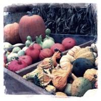 Halloween at Hunter Pumpkin Patch, Olympia