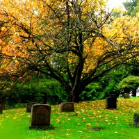 Pierce County's Potter's Cemetery
