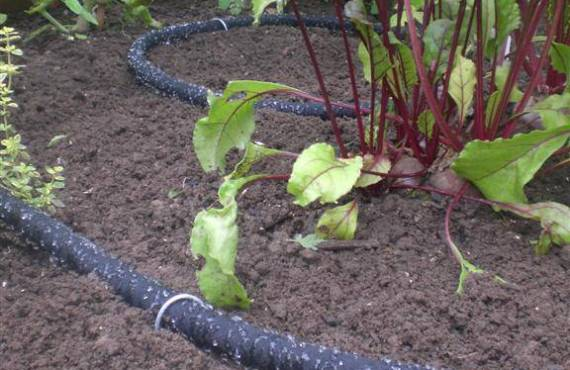 April: Tips For Watering Polytunnel Plants