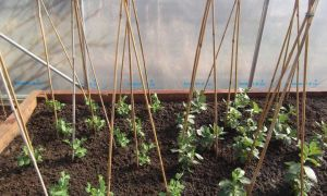 Jobs to do in a Polytunnel in March