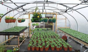 February already….What's going on in the Polytunnel