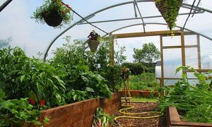 July already and we're busy celebrating summer in the Polytunnel.