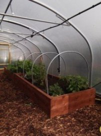 Rasied Beds in a Polytunnel