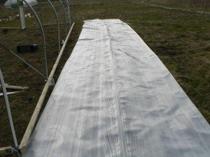 Replacement polythene cover got a polytunnel