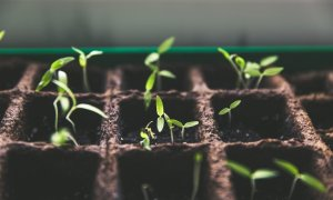 What Should and Shouldn't Be Grown in a Polytunnel?