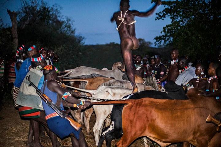Cows02