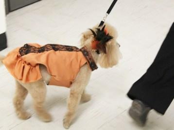 zoe in peach dress