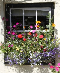 Charming Spring Window Boxes - flagsonastickblog.com