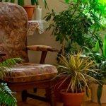 PROBLEMAS DE LAS PLANTAS DE INTERIOR