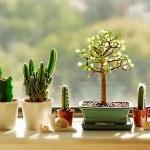 PLANTAS EN LAS VENTANAS, CONSEJOS