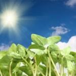 CONSEJOS PARA PROTEGER LAS PLANTAS DEL SOL