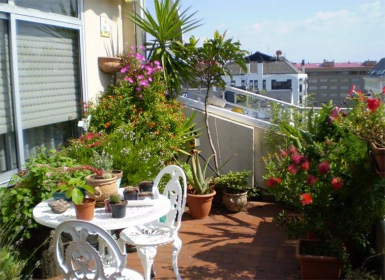 Cuidados para las plantas en la terraza blog patricia for Plantas jardineras terraza