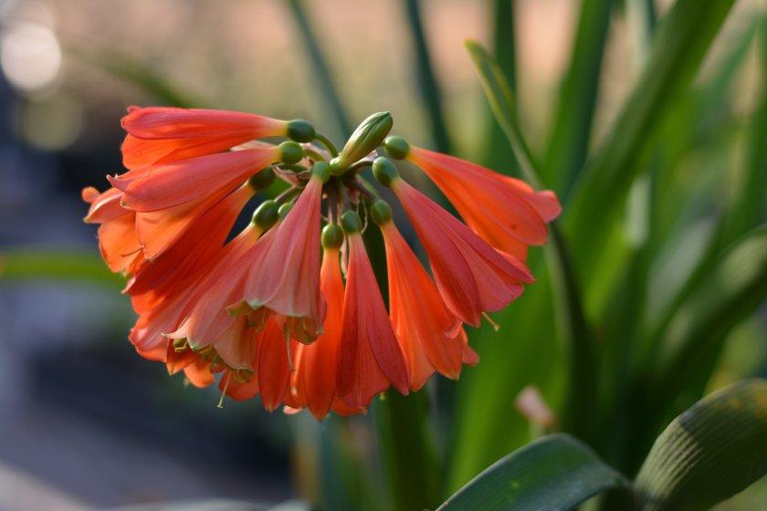 Patricia López Diseño Floral - Floristería en Añover de Tajo
