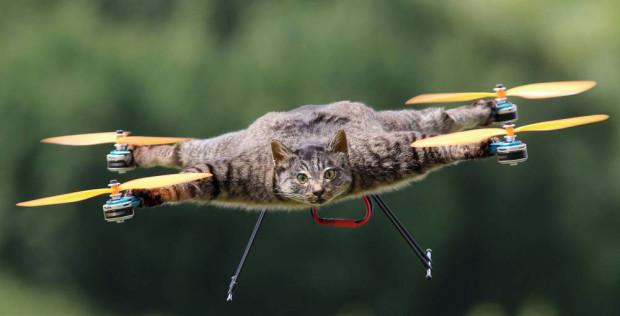 Taxidermy Animal Drones