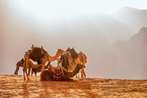 Financial Strategies: Camels