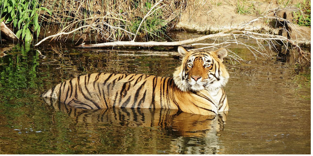 Forest Department orders to shut tiger reserves during Monsoons