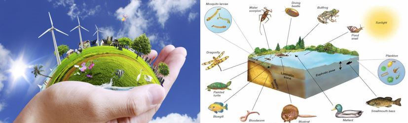 An Introduction to Environment and Ecosystem