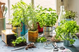 Votre jardin aromatique façon «DIY»