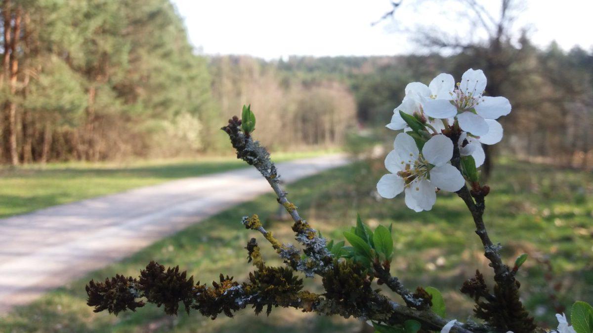 Der Seenländer (Etappe 5 Teil 2): Mit Frühlingsgefühlen von Ramsberg nach Langlau