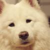 「勇者ヨシヒコと導かれし七人」.第8話.ヨシヒコがパラディンになろうとして白犬になる。au、ソフトバンクのパロディごっちゃまぜ。(ネタバレ)