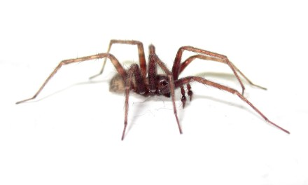 Spiders, Tsunamis and My Ego