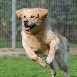 animal pet fundraising ideas walkathon race min
