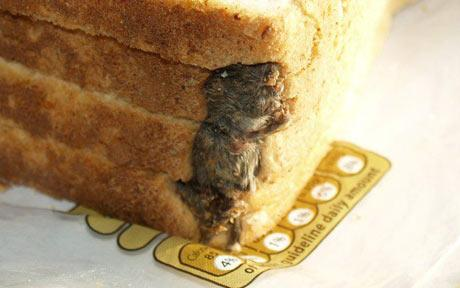 mouse inside hovis bread