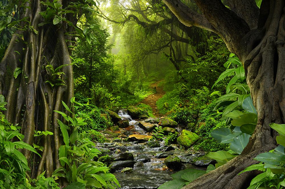 Guayusa Tea in the Amazon Rainforests of Ecuador
