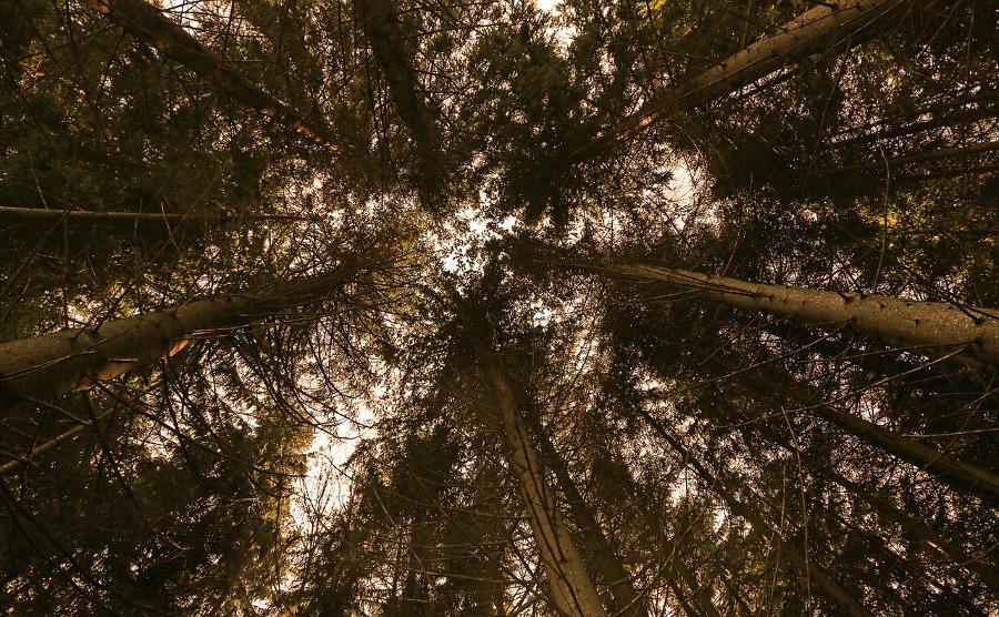 stock trees