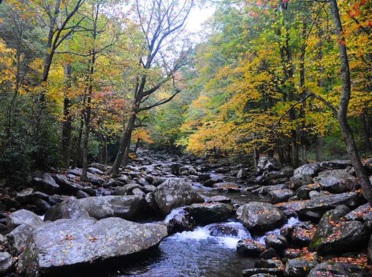 Rocky river surrounded by golden fall foliage in Great Smoky Mountains National Park