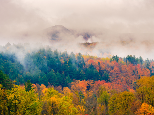 Foggy red, yellow and green foliage in Vermont's Green Mountain National Forest