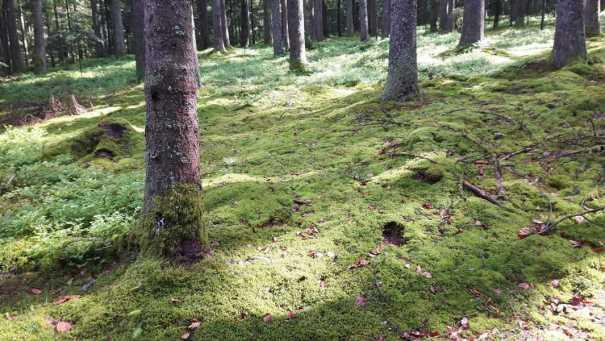 mit zauberhaftem Lichtspiel auf dem Waldboden ...