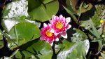 Rückkehr zum Frühling Qigong im Achtsamkeitszentrum München