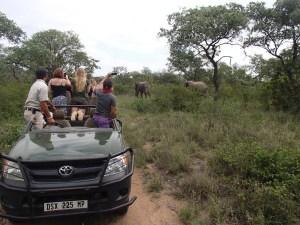 Spotting elephants on safari