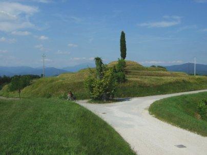 Vineyard near Cividale del Friuli