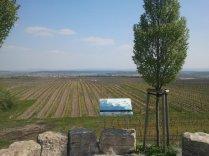 Urlaub auf der Weininsel bei Kitzingen, 2011