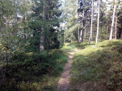 Pfad in Richtung Fürstberg